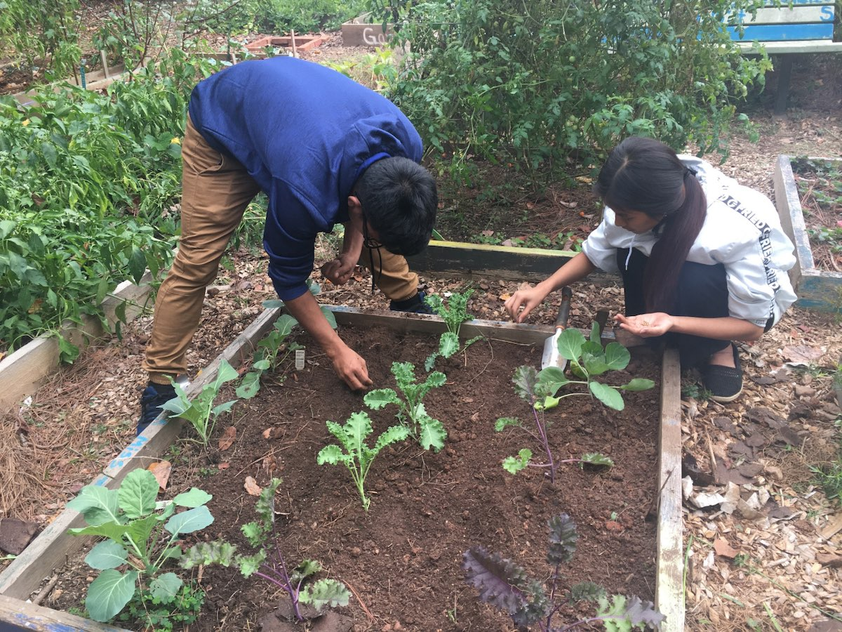 Students planting Fall veggies in a garden
